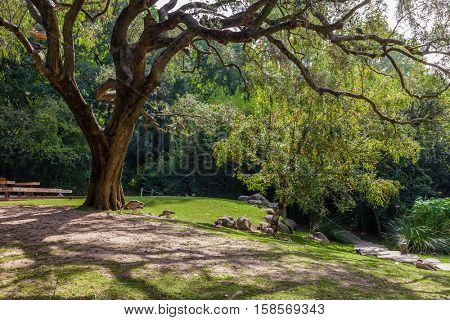 Lisbon, Portugal - October 19, 2016: Gardens of the Calouste Gulbenkian foundation. An urban park open to the public, and very popular especially among College students.