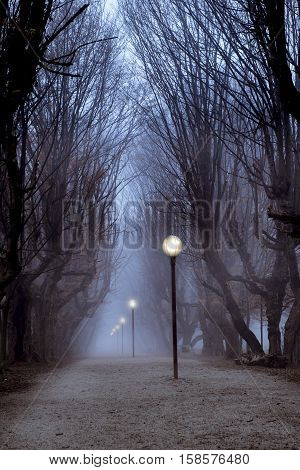 Central park hornbeam tree alley in fog with lit street lamps sinister and mysterious feeling