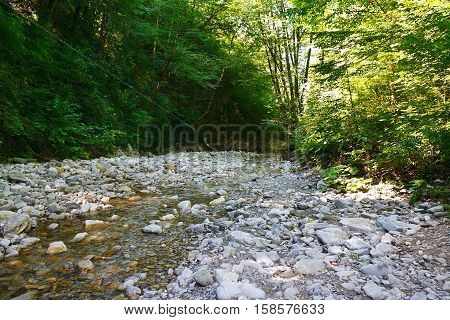 Glorious mountain creek among the southern forests