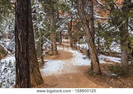 Snowy forest path at Bryce Canyon National Park in Southern Utah.