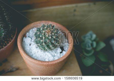 Little cactus plant in the flower pot. cactus. Various cactus plants. cactus plants in retro effect image.(selective focus )