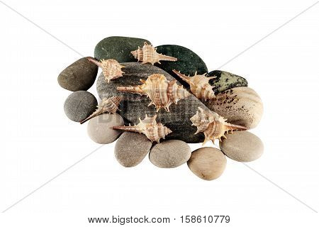 Isolated pebbles and seashell on white background for your design