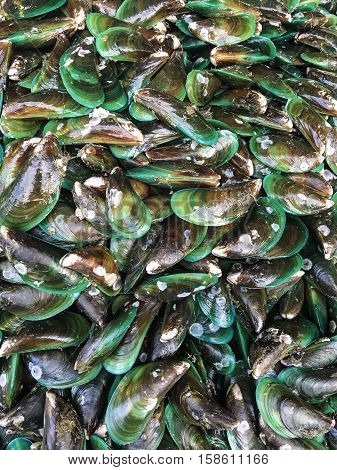Fresh mussels isolated on white background, boiled green shell mussel, fresh green shell mussel, half shell green shell mussel, NewZealand mussel
