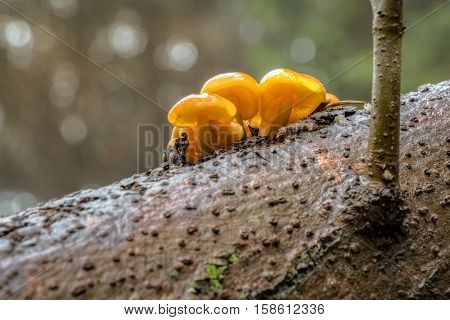 Edible Mushrooms Known As Enokitake With Blurred Background