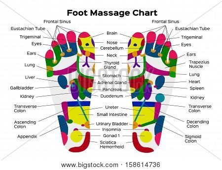 Stock Vector Illustration: Foot reflexology chart with accurate description of the corresponding internal organs and body parts. Vector illustration on black background. anatomy poster