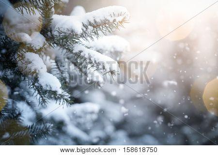 Fir branch on snow with festive lights