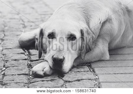 dog black White loyal friend sad look  friend