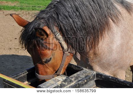 one horse eating hay from a feeding-trough