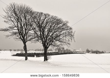 Black and white shot of a winter landscape on a gray day