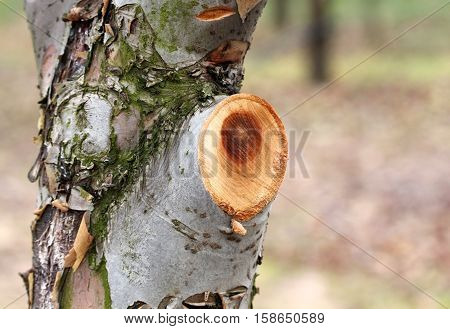 picture of a pruned apple tree in november