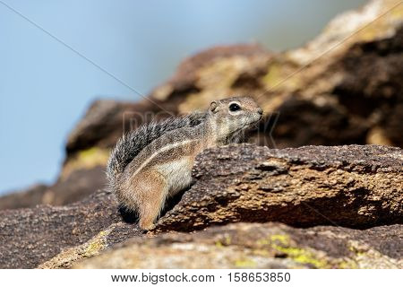 Chipmunk stands on a stone in the sunshine on a blurred background of stones