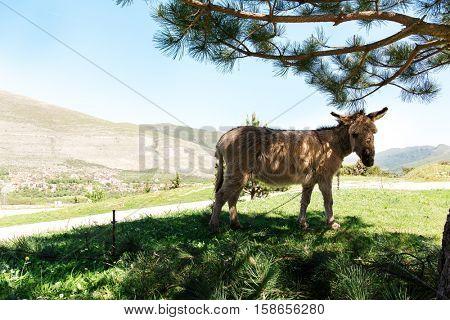 donkeys under the tree