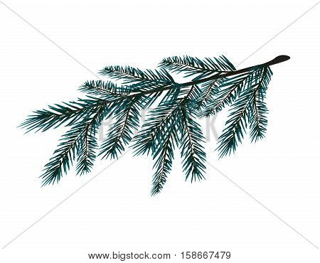 Blue realistic branch of fir tree. Fir branches. Isolated on white. Christmas vector illustration