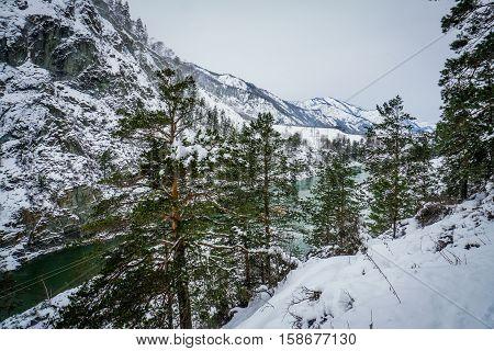 Mountain river Katun, Altai, Russia. A winter scenic.