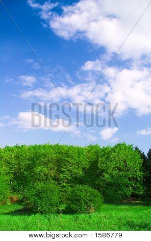 Forest Landscape..