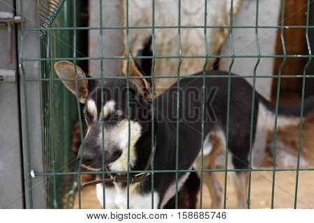 Homeless dog in animal shelter cage