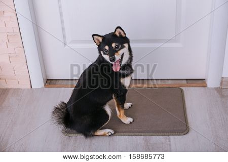 Cute little Shiba Inu dog sitting on doormat at home