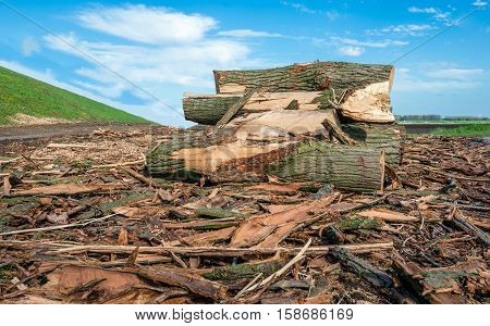 The tall trees along the embankment are cut down because of the danger to blow down. Now remains just a small pile of logs and bark.
