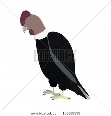 silhouette condor animal bird icon vector illustration