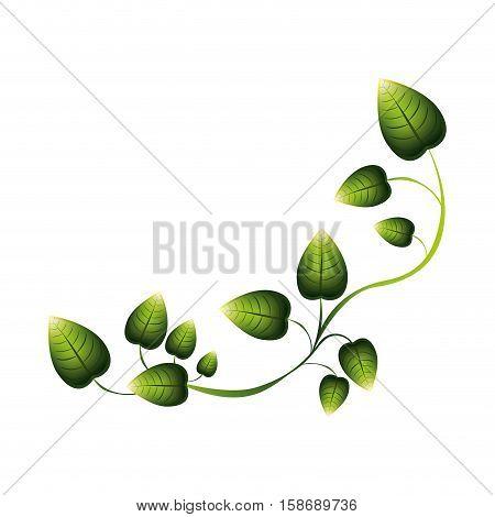 green creeper with multiple leaves vector illustration