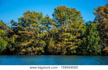 Town Lake in Austin Texas USA during the beginning of Fall as leaves along the colorado river start to change colors and drop their leaves