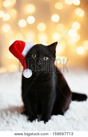 Black cat in Santa hat sitting over holiday lights. Pet's Christmas concept. Kitten on Xmas studio bokeh background.