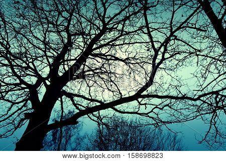 Dark dead winter tree and sky. Nature season specific concept. Blue colors.