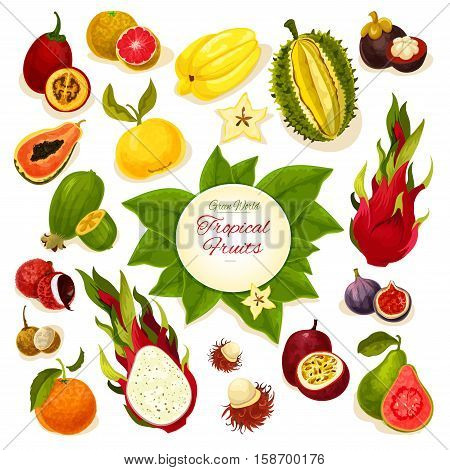 Tropical fruits poster of vector whole and sliced juicy fruits durian and carambola, dragon fruit and guava, lychee and feijoa, passion fruit maracuya, figs and rambutan, mangosteen, orange, papaya, blood orange, longan