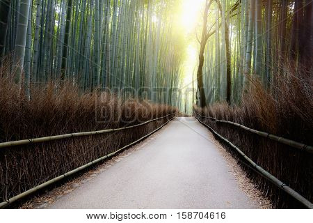 The Arashiyama Bamboo Grove of Kyoto Japan