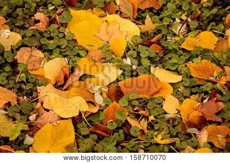 Colorful autumn leaves on the ground. Suitable for reference or source of art and design.