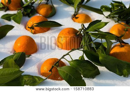 Fresh tangerines lie on the snow. Tangerine is a symbol of the Chinese New Year.