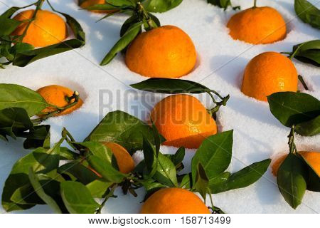 Background of fresh tangerines with leaves. Tangerine is a symbol of the Chinese New Year.