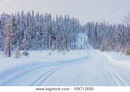 Skiing trail in beautiful winter landscape - big trees covered snow, ski resort, Finland, Lapland