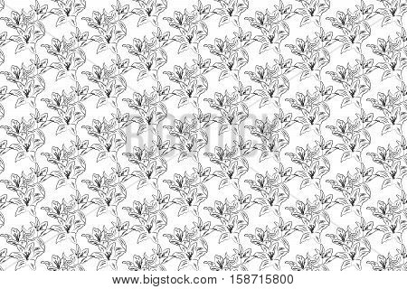 Vector background decorative lily flowers on white background. Seamless pattern with hand drawn lilies
