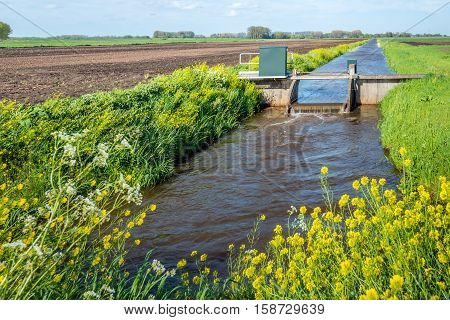 Small weir in a stream for water level control in a Dutch polder. It's spring with young and fresh grass and yellow flowering rapeseed.