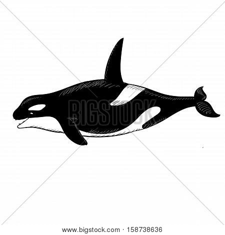 Vector illustration of Grampus icon in doodle style on white background.