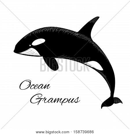Vector illustration of Grampus icon in doodle style on white background with text.