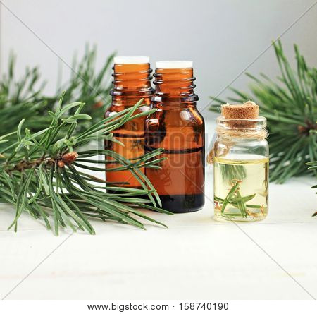 Set of various essential oil bottles, fresh green coniferous pine branches. Natural healing essences. Square crop.