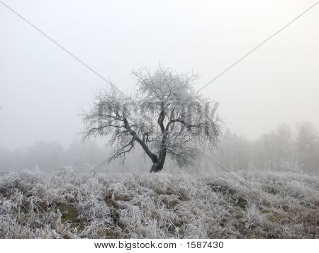 A lonely tree standing on snowy plain poster