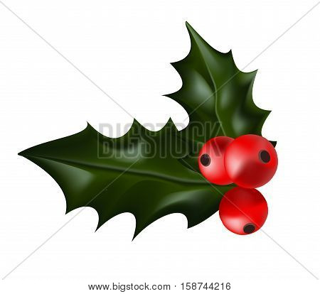 Holly Christmas Plant. Holly berry Christmas Illustration
