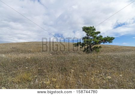 Lonely relict pine at the top of the mountain. Tokluk-Syrt Ridge Crimea. September.