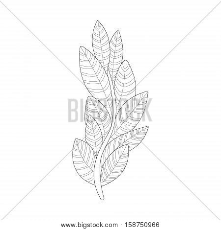 Algae Plant Sea Underwater Nature Adult Black And White Zentangle Coloring Book Illustration. Doodle Monochrome Vector Drawing With Geometric Mosaic Patterns For Coloring.