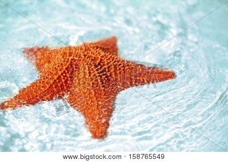 Beautiful colorful bright yellow starfish in clean ocean blue water