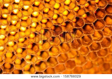 Light shines through the honeycomb, honeycomb background