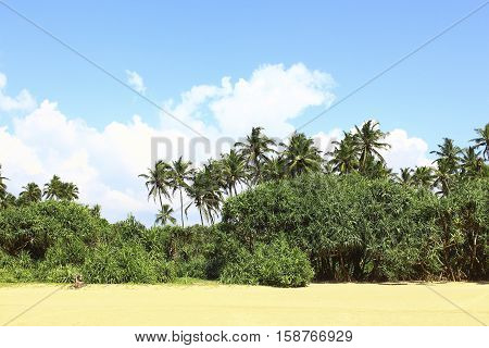 Tropical vegetation on the beach Bentota, Sri Lanka