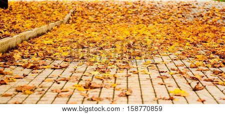 Maple Leaves On The Concrete Slab Tiles Paved Floor.