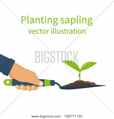 Planting sapling concept. Garden shovel in hands man with soil and plant. Green sprout. Vector illustration flat design. Seedling agriculture. Cultivated ground. Growth and environmental recovery.