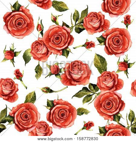 Wildflower rose flower pattern in a watercolor style isolated. Full name of the plant: red rose, hulthemia, rosa. Aquarelle wild flower for background, texture, wrapper pattern, frame or border.
