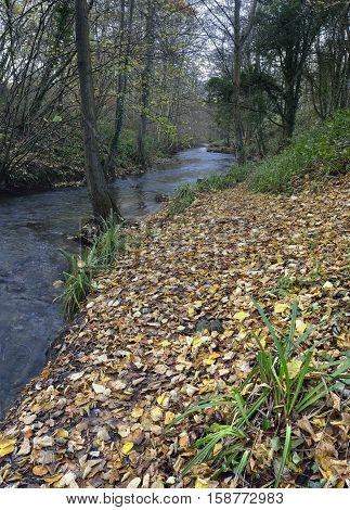 River Frome in early winter Stroud Gloucestershire