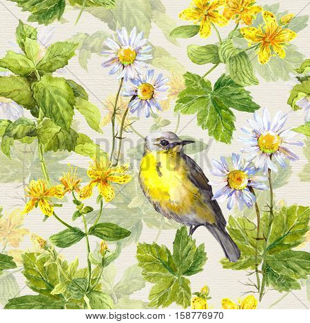 Bird in herbs, meadow flowers, spring grasses. Herbal repeating pattern. Water colour